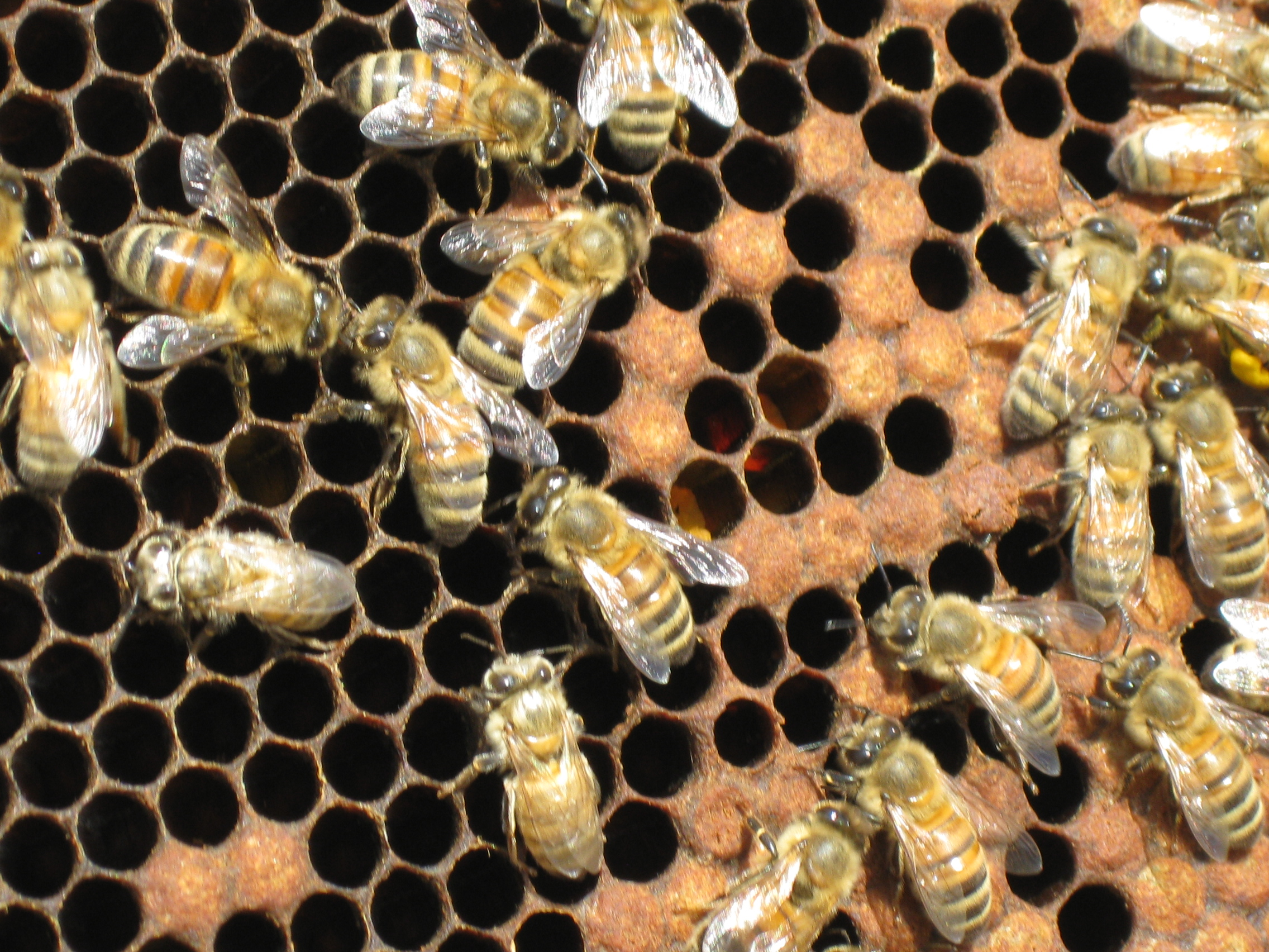 Corso pratico di apicoltura – Seconda edizione
