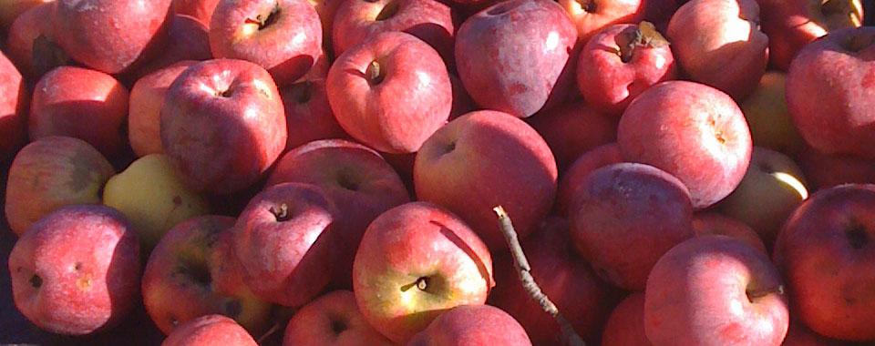 Brulè di succo di mela